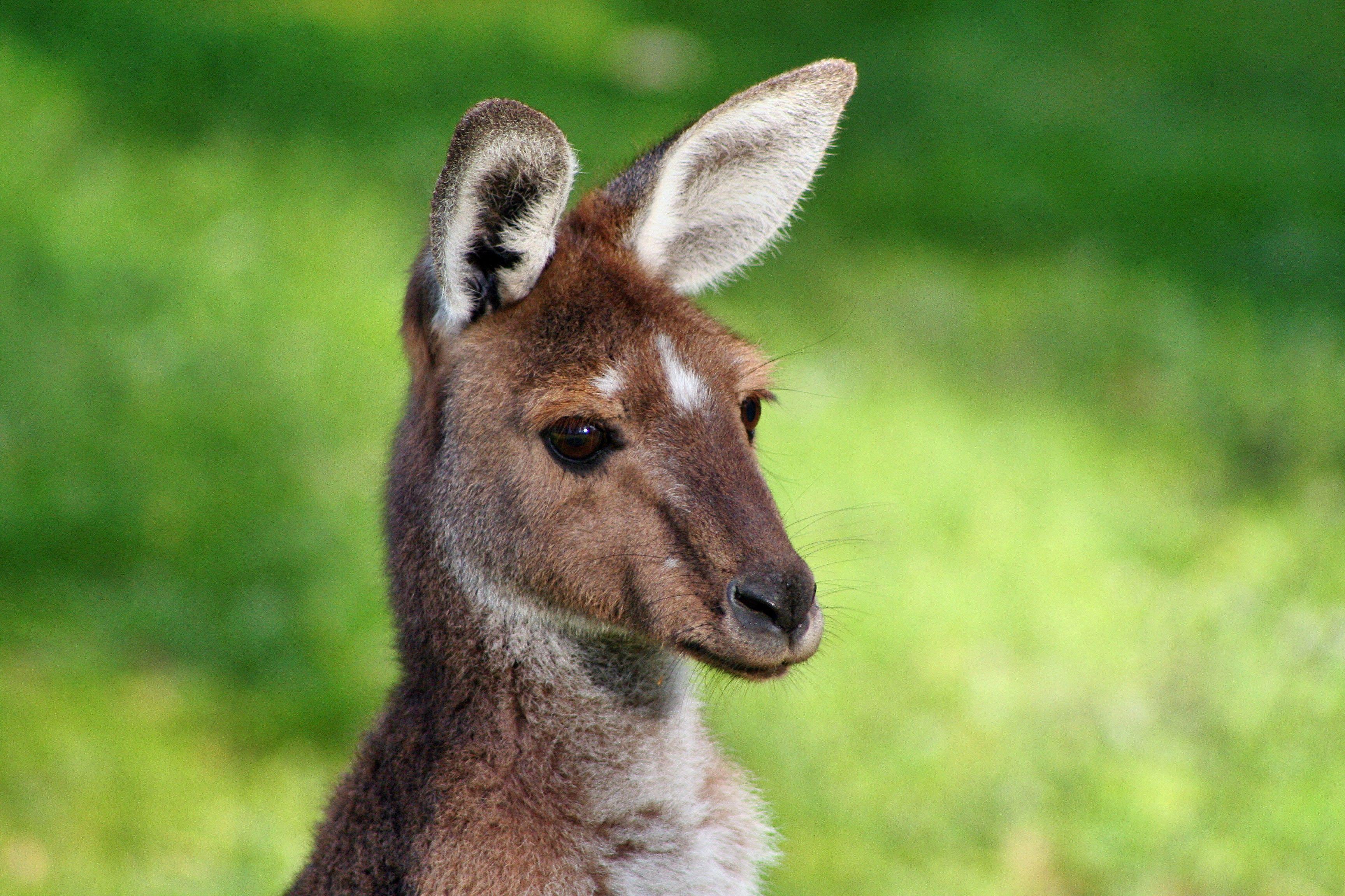 Vivre un an en Australie