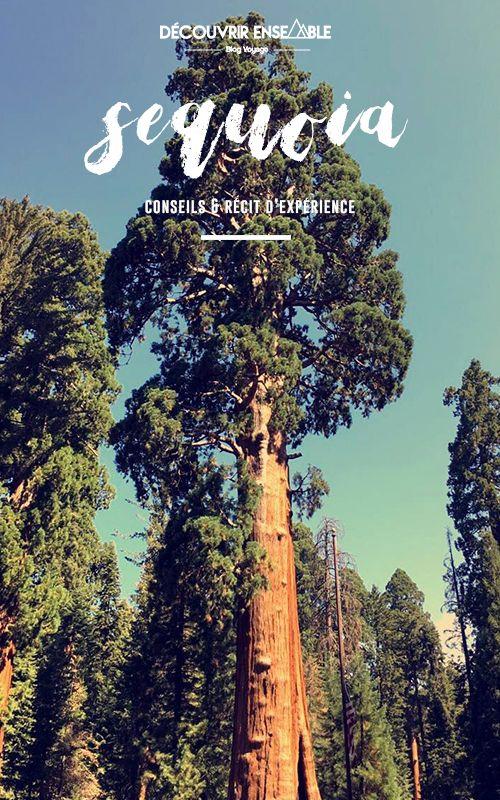 Visiter le Séquoia National Park