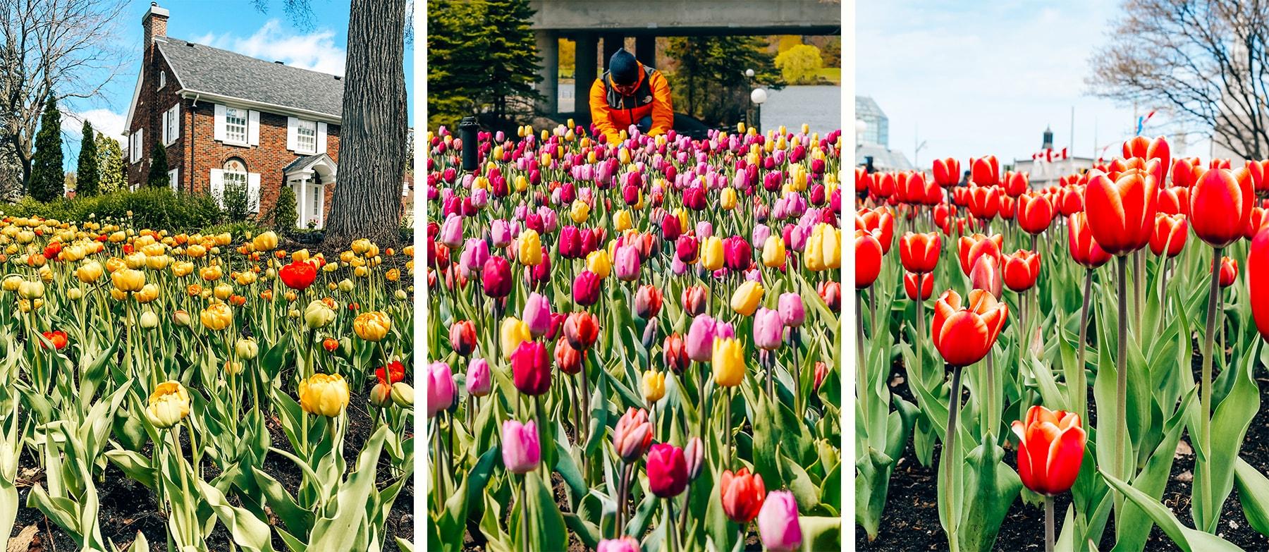 Festival des tulipes Ottawa