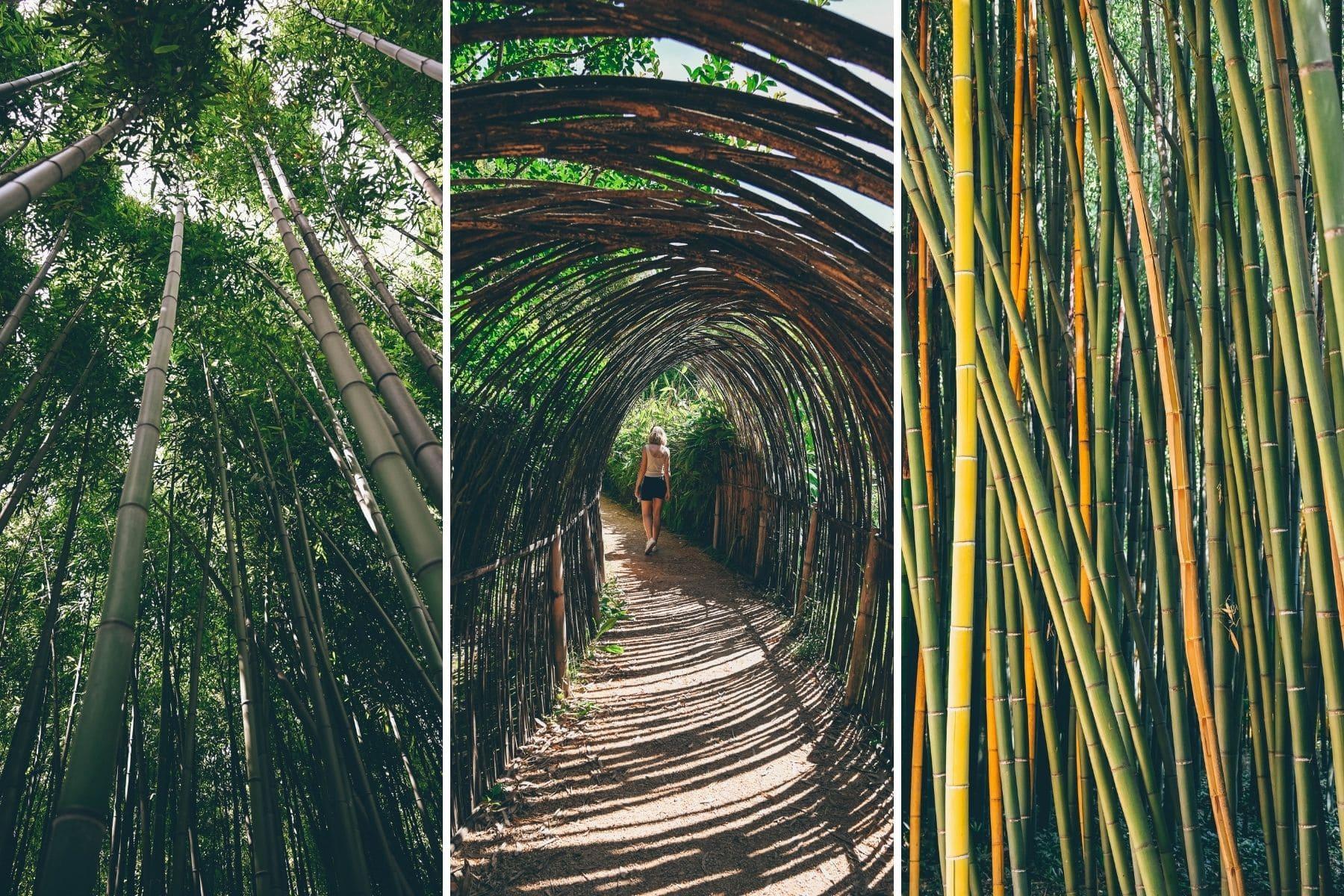 La Bambouseraie en Cevennes